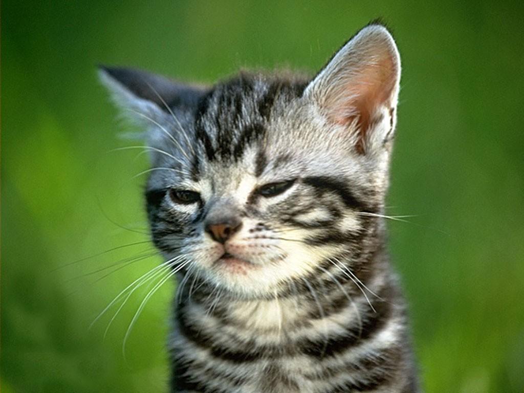 暴多可爱猫咪壁纸图片7_pcpop电脑