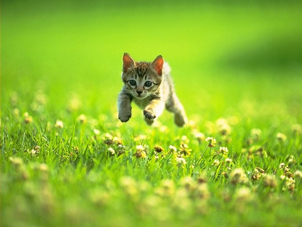 暴多可爱猫咪壁纸图片11