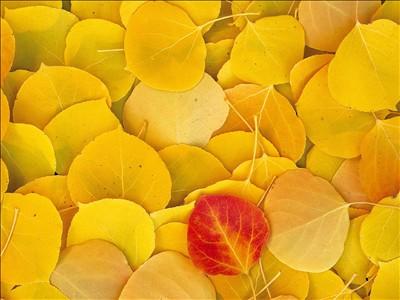 银杏叶平面图